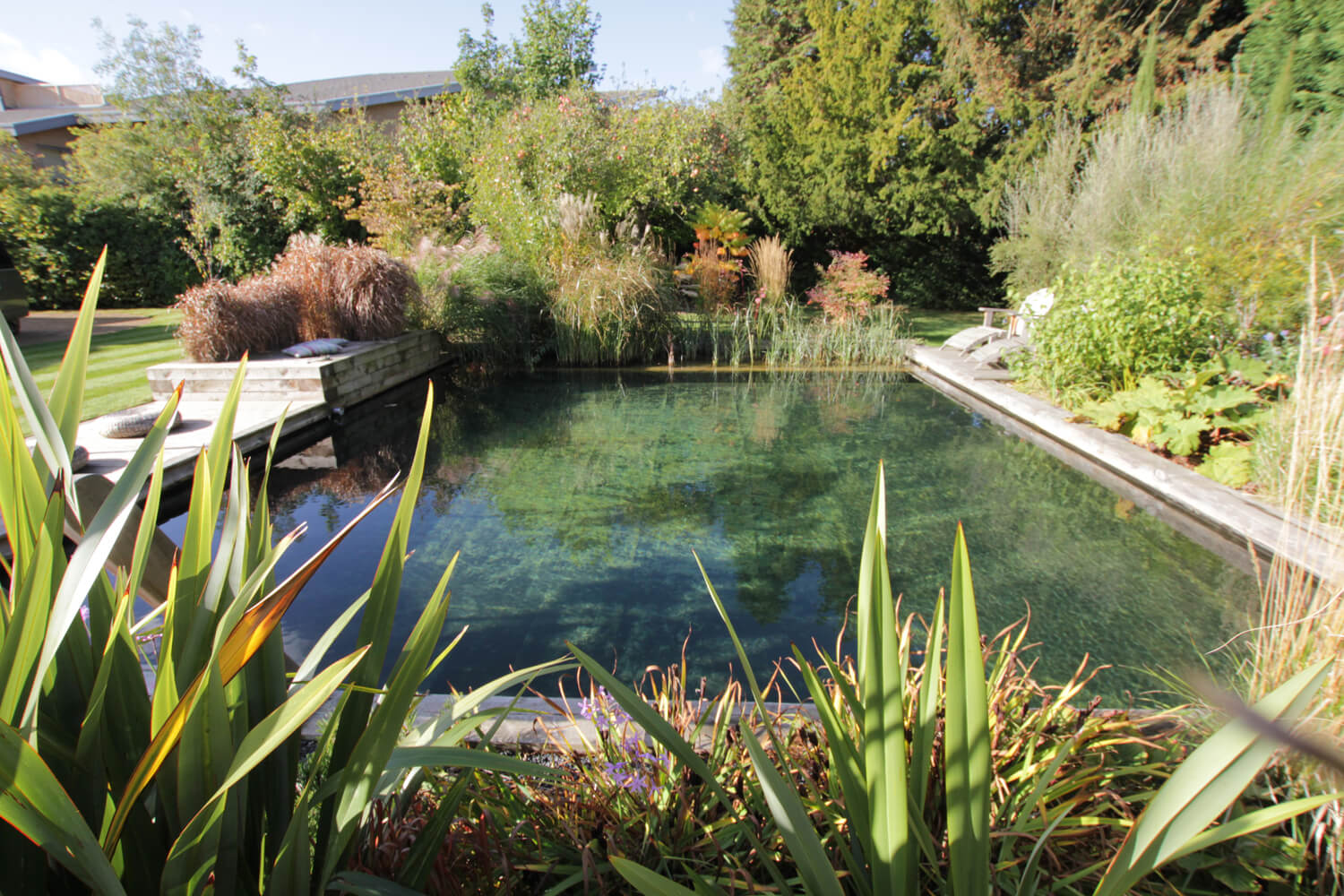 Natural pool in a garden